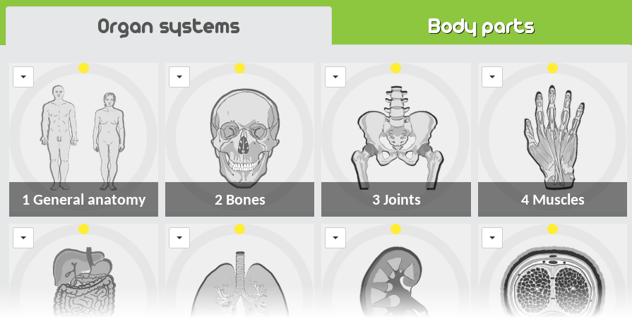 PracticeAnatomy com - review human anatomy in pictures