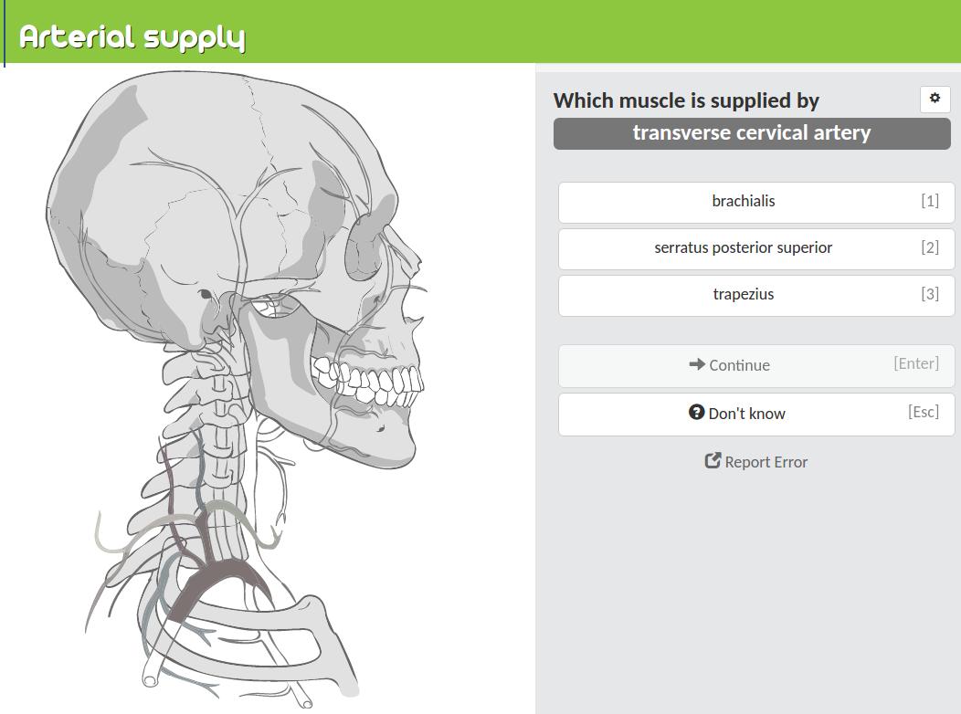 Practiceanatomy Review Human Anatomy In Pictures